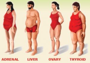 4afc1cdca3d9b Body Type - How it Can Be Related to Your Health - Dr. Becky Campbell
