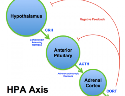 HPA-Axis Dysfunction – How Stress Can Cause Weight Gain, Fatigue, Sleeplessness and More