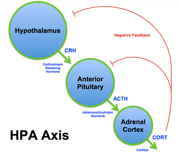 HPA-Axis dysfunction