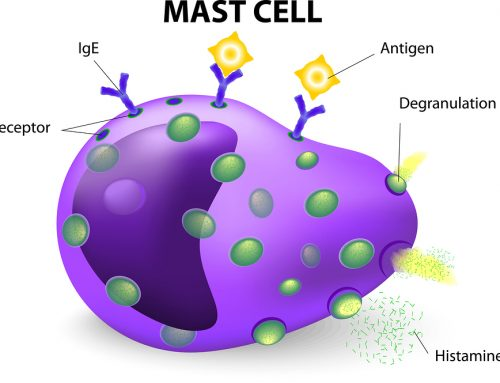Mast Cell Disorder: Causes, Symptoms, Treatment